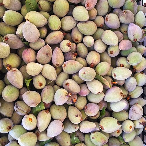 Mandorle verdi 5 kg-Azienda Agricola Mezzaria